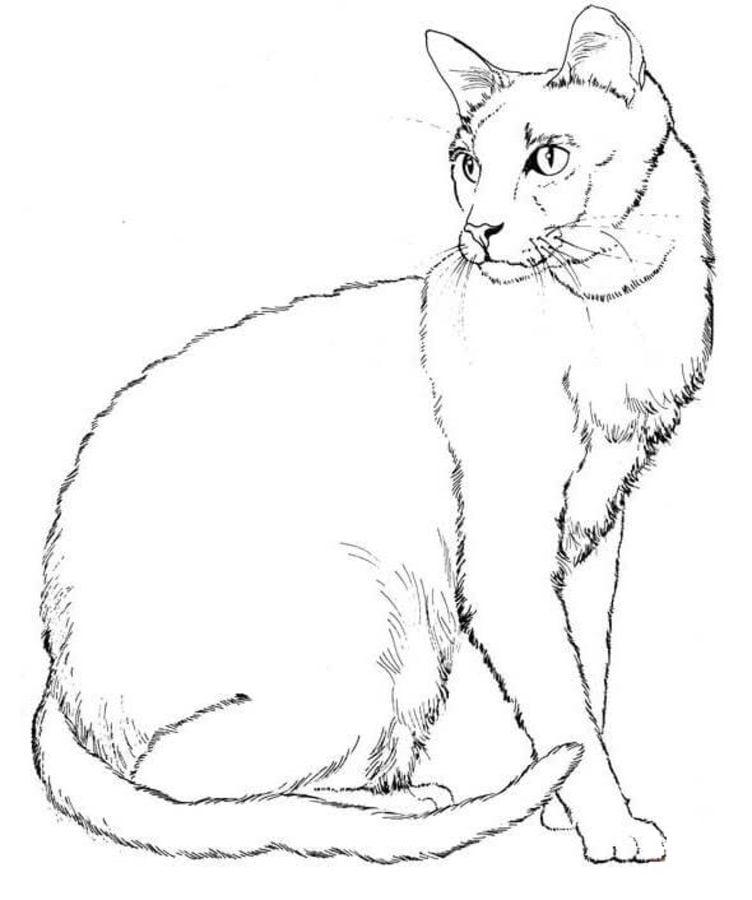 господь вас реалистичные коты раскраска определенных случаях