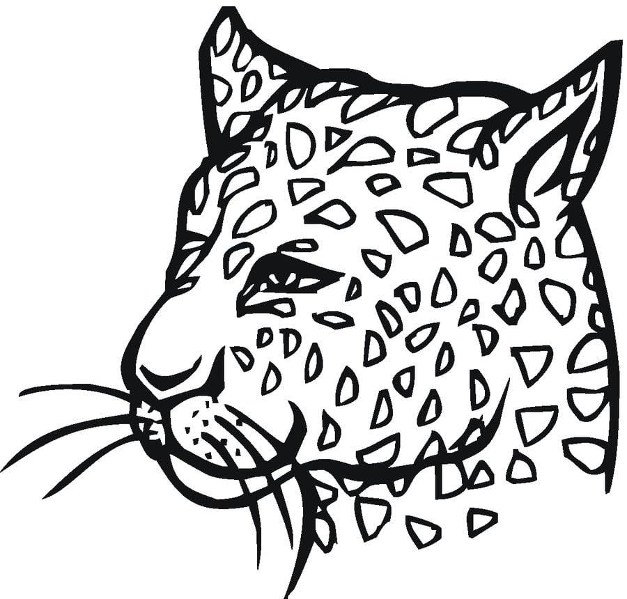 Dibujos para colorear: Guepardo imprimible, gratis, para los niños y ...