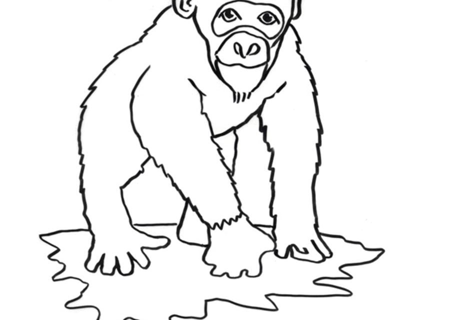 Dibujos para colorear: Chimpancé imprimible, gratis, para los niños ...