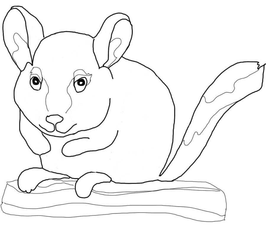 Dibujos para colorear: Chinchillas imprimible, gratis, para los ...