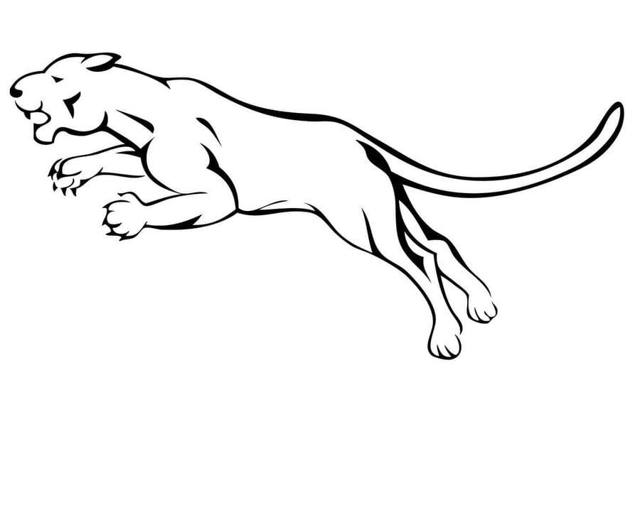 Dibujos Para Colorear Puma Imprimible Gratis Para Los Ninos Y