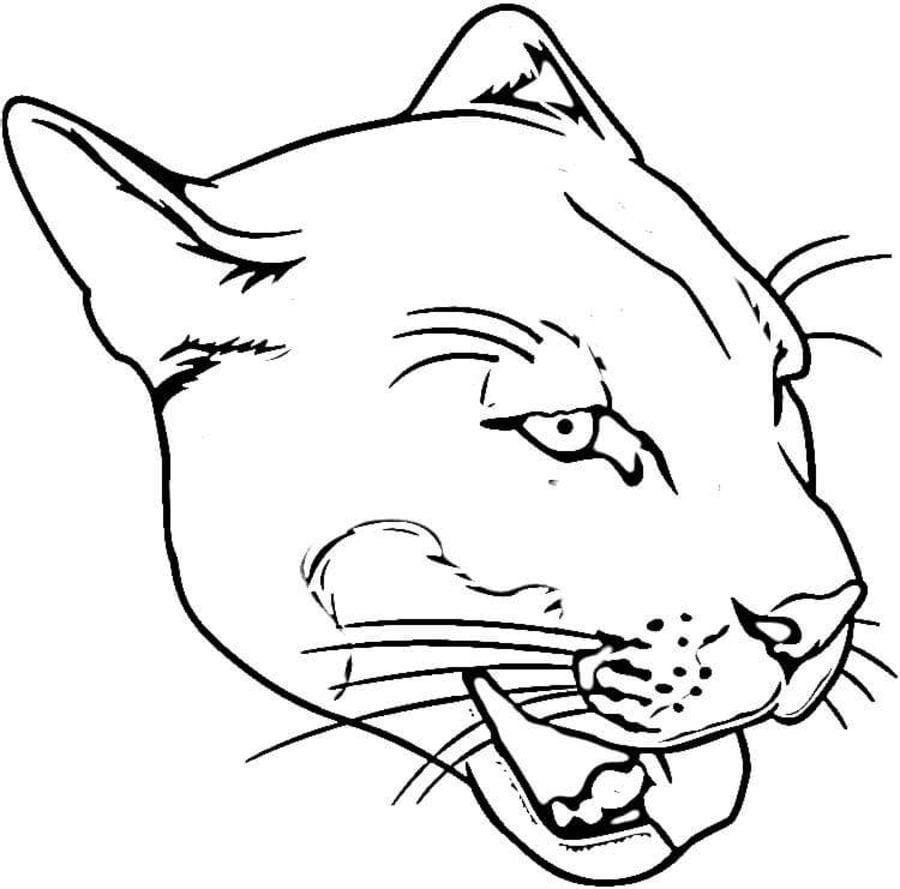 Cougar Face Line Drawing : Disegni da colorare puma stampabile gratuito per