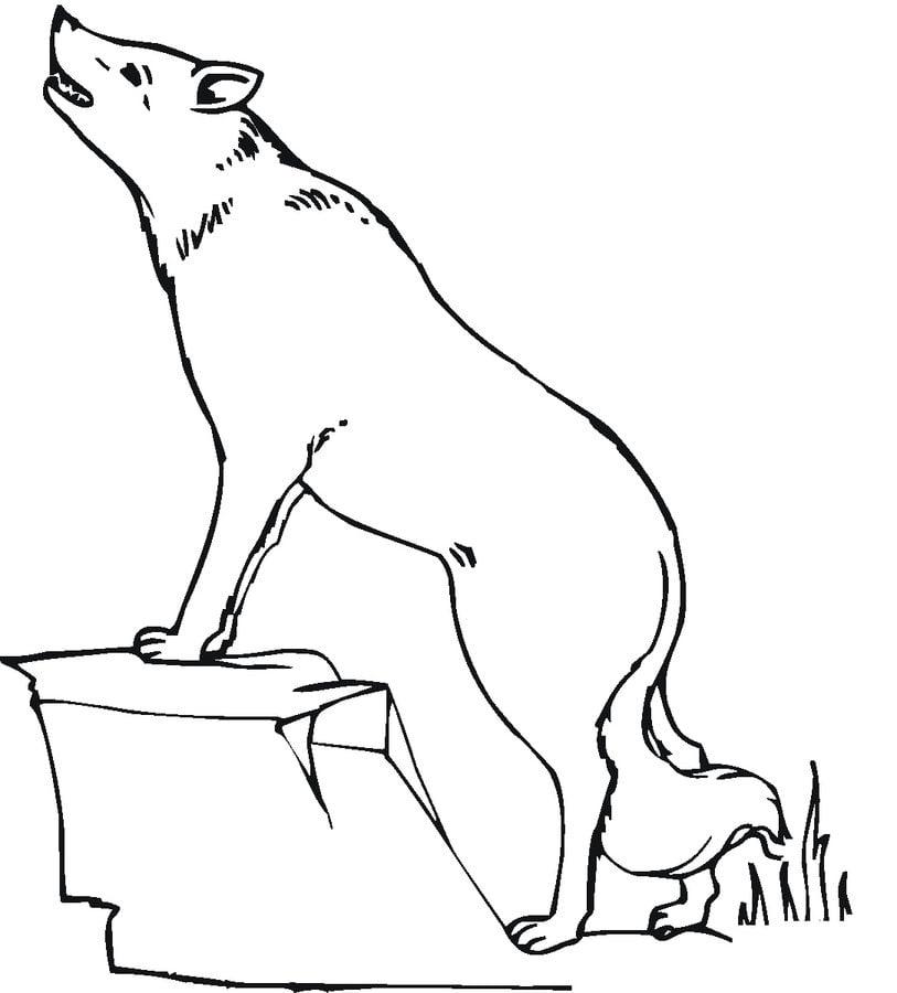 ausmalbilder ausmalbilder kojote zum ausdrucken