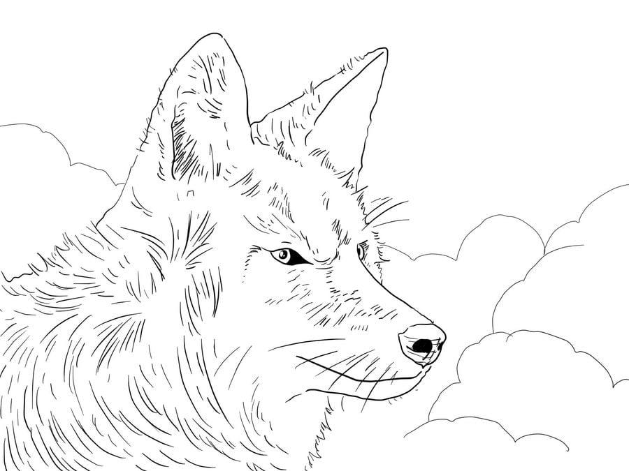 Contemporáneo Página Para Colorear De Coyote Aullador Elaboración ...