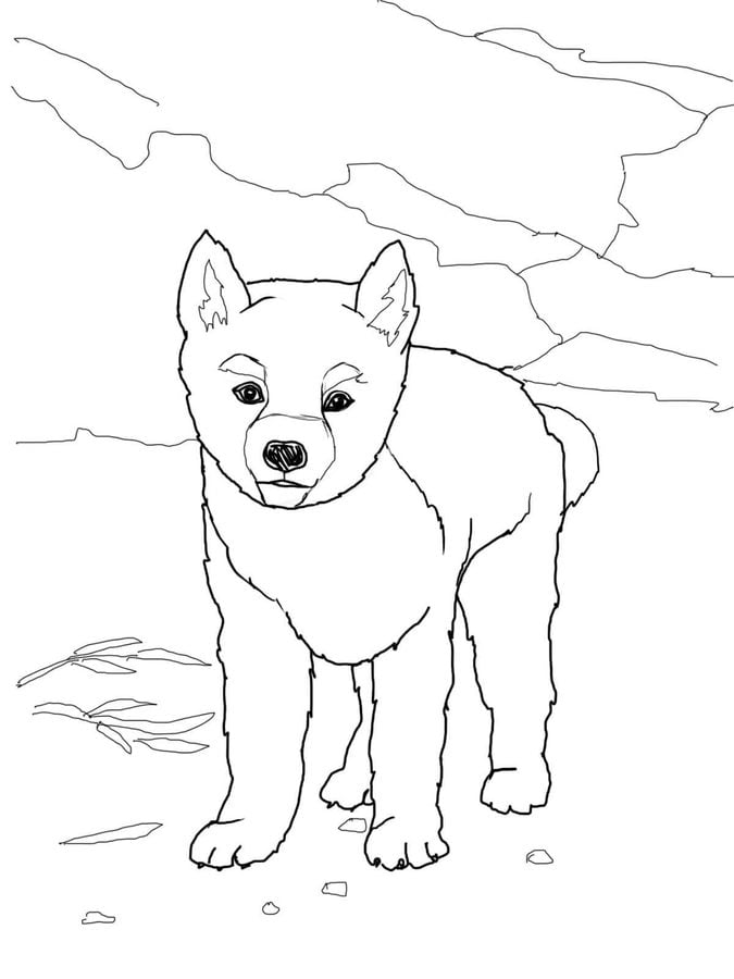 Coloring pages Dingo printable