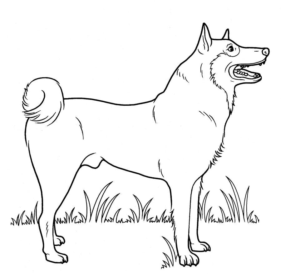 Disegni da colorare disegni da colorare cani stampabile for Cani da colorare e da stampare