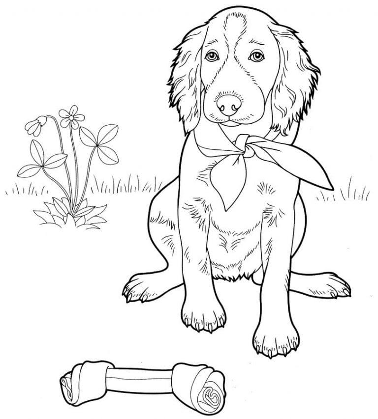 ausmalbilder hunde zum ausdrucken kostenlos für kinder