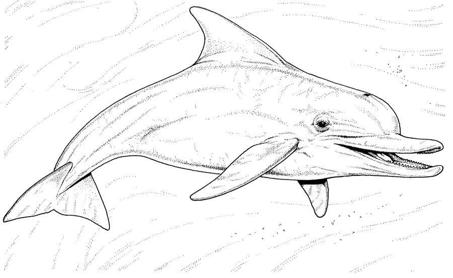 Kolorowanki Kolorowanki Delfin Do Druku Dla Dzieci I Doroslych