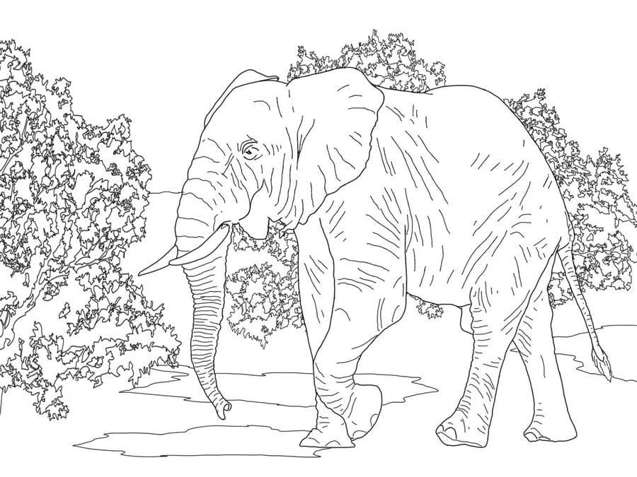 Berühmt Malvorlagen Elefant Gesicht Ideen - Beispiel Wiederaufnahme ...