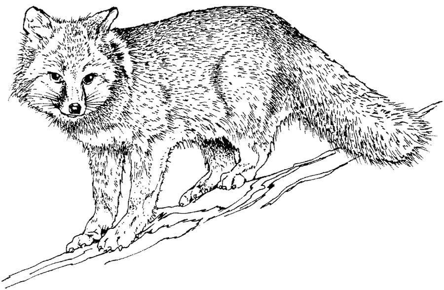 disegni da colorare  volpi stampabile  gratuito  per