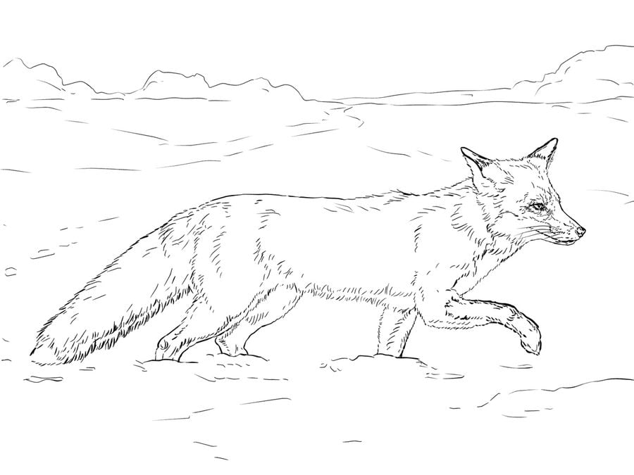 coloring pages for tundra - photo#28