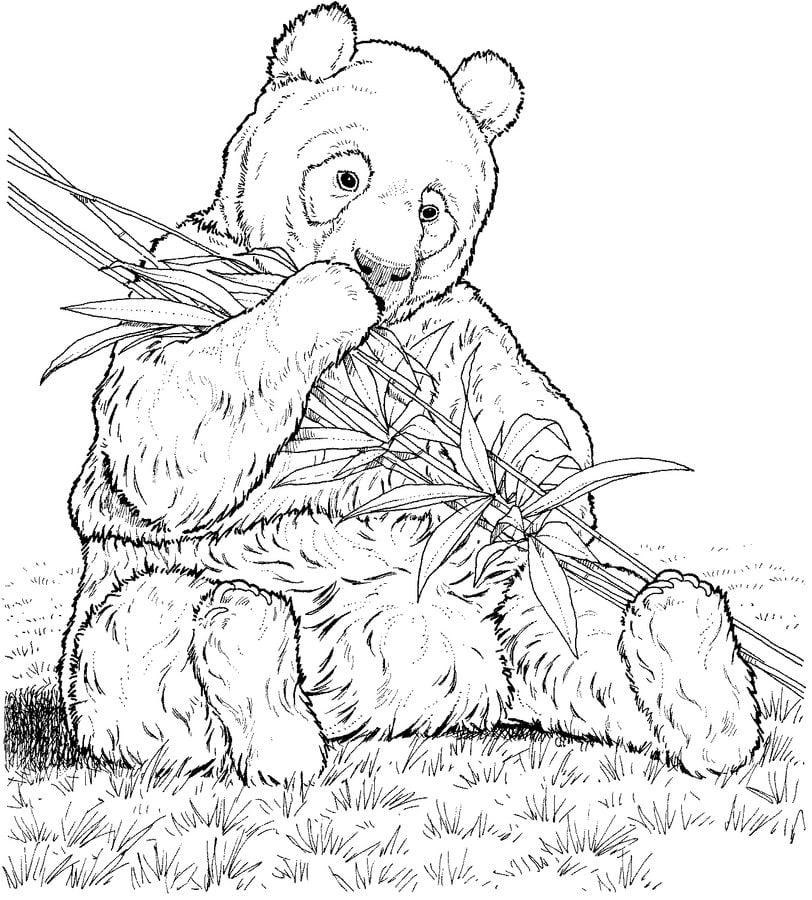 30 Free Panda Coloring Pages Printable | 900x812
