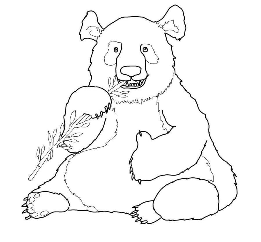 Ausmalbilder Ausmalbilder Großer Panda Zum Ausdrucken Kostenlos
