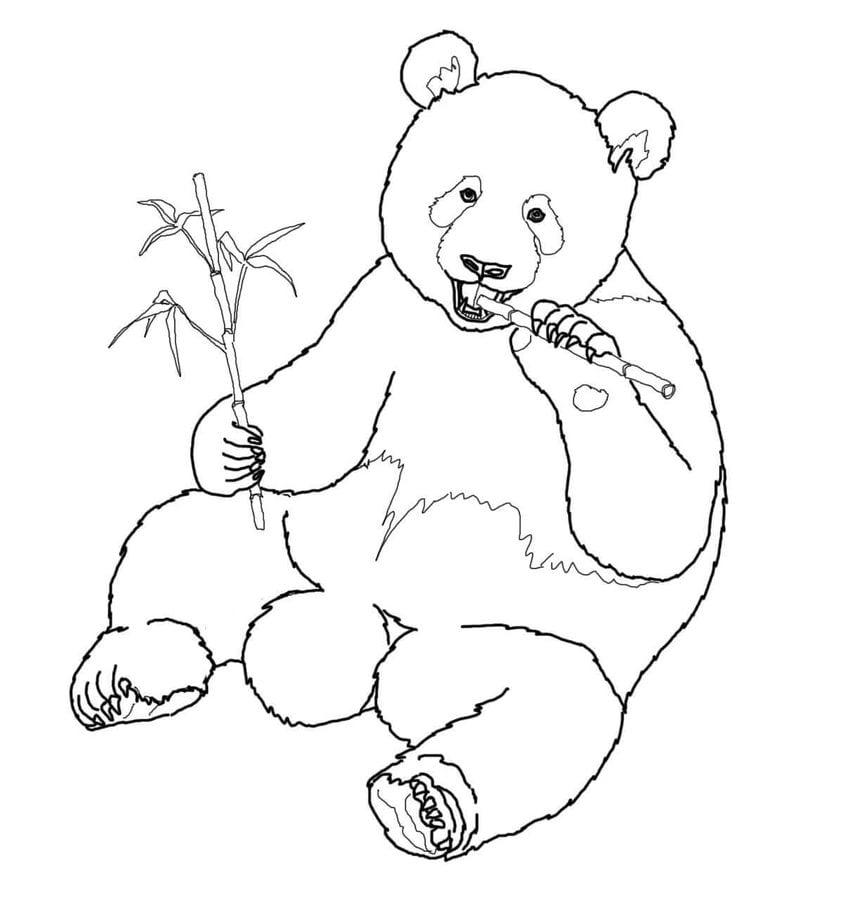 Dibujos para colorear: Panda gigante imprimible, gratis, para los ...