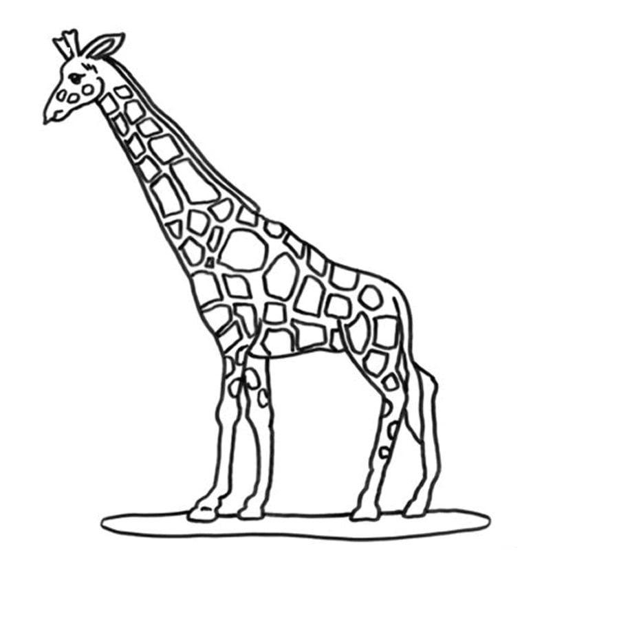 Kolorowanki kolorowanki yrafy do druku dla dzieci i for Immagini giraffa per bambini