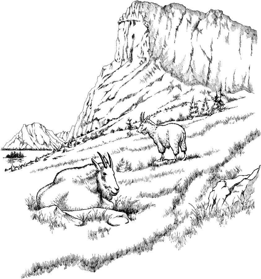 Disegni da colorare capre stampabile