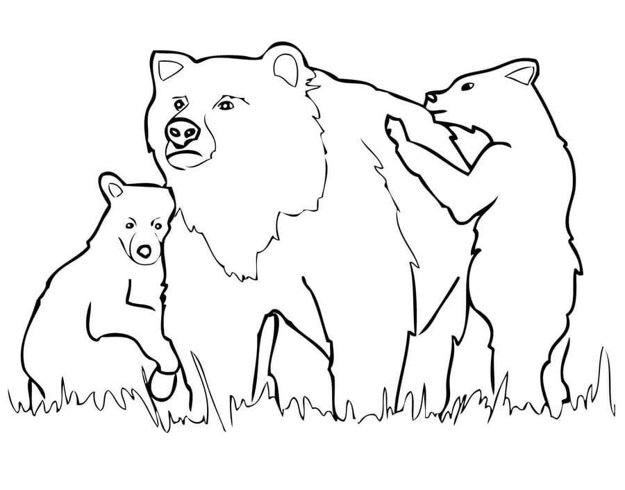 Ausmalbilder Ausmalbilder Grizzlybär Zum Ausdrucken Kostenlos