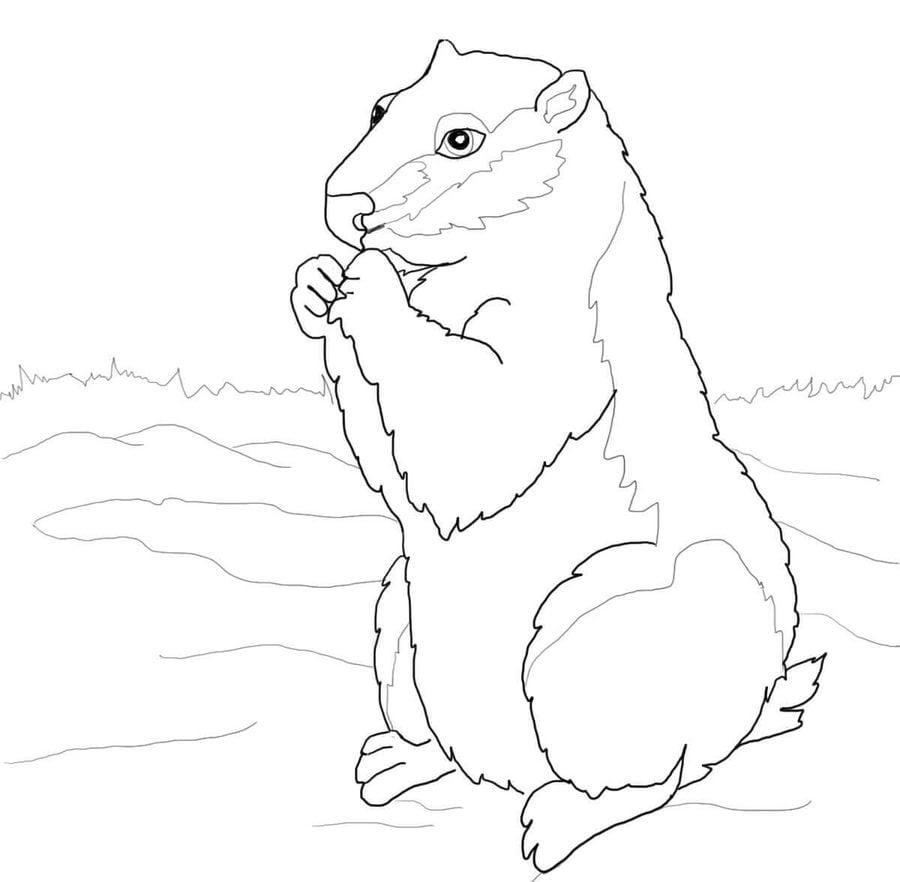 Dibujos para colorear: Marmotas canadienses imprimible, gratis, para ...