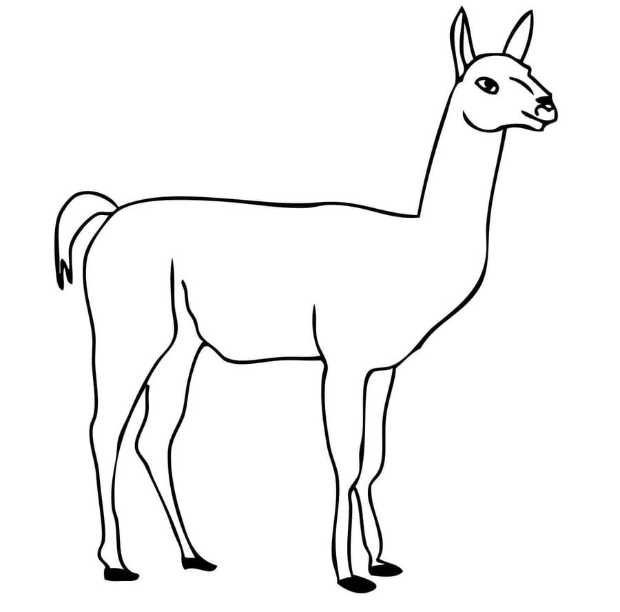 coloring pages guanaco printable for kids u0026 adults free