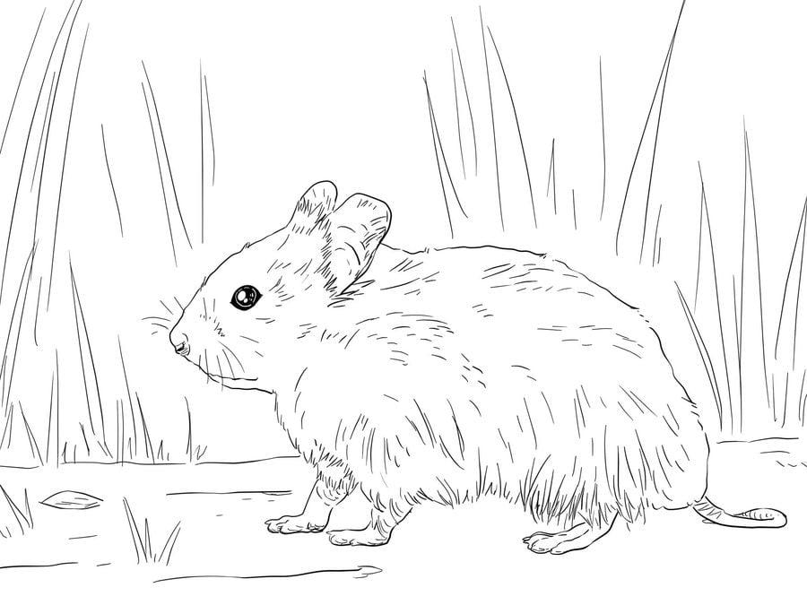 Ausmalbilder Hamster Zum Ausdrucken Kostenlos F 252 R