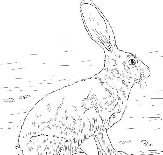 Disegni da colorare disegni da colorare lepri stampabile for Lepre disegno da colorare