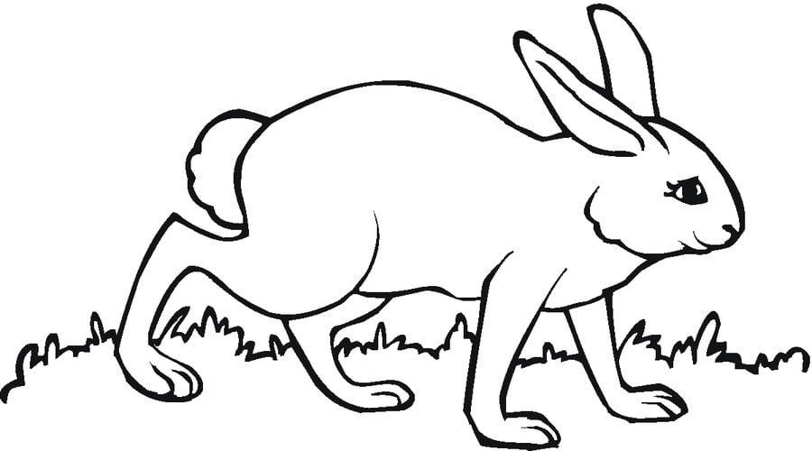 Disegni da colorare lepri stampabile gratuito per for Lepre disegno da colorare