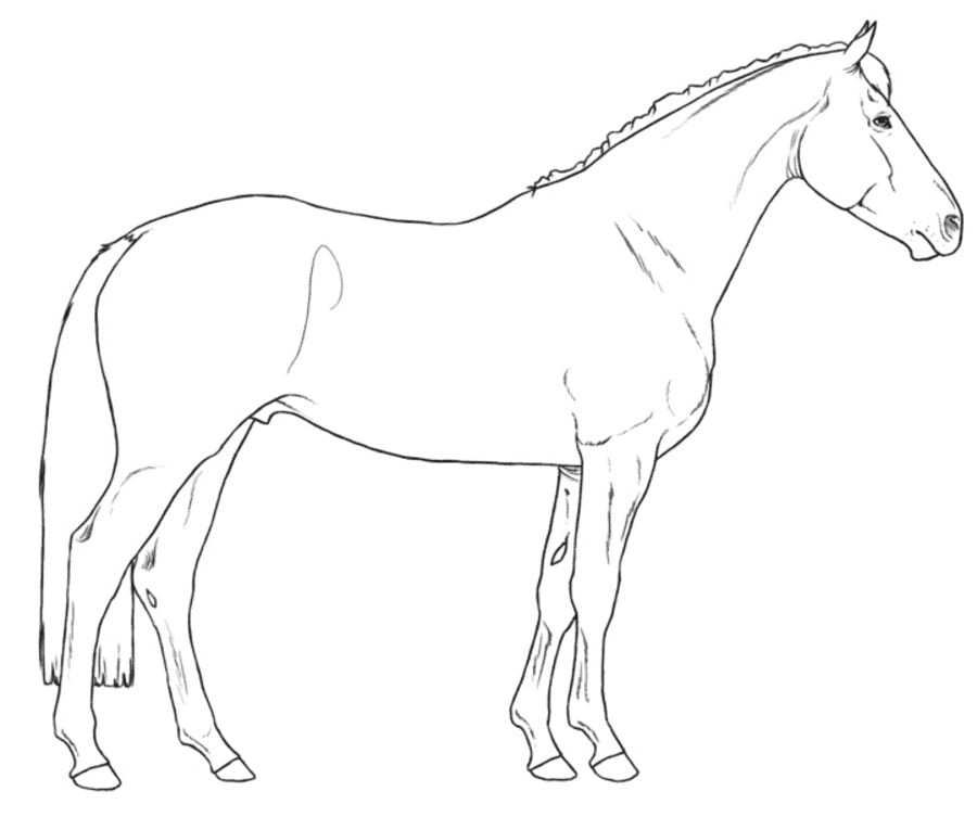 Big Printable Coloring Pages Horses - Coloring Pages For All Ages ... | 753x900