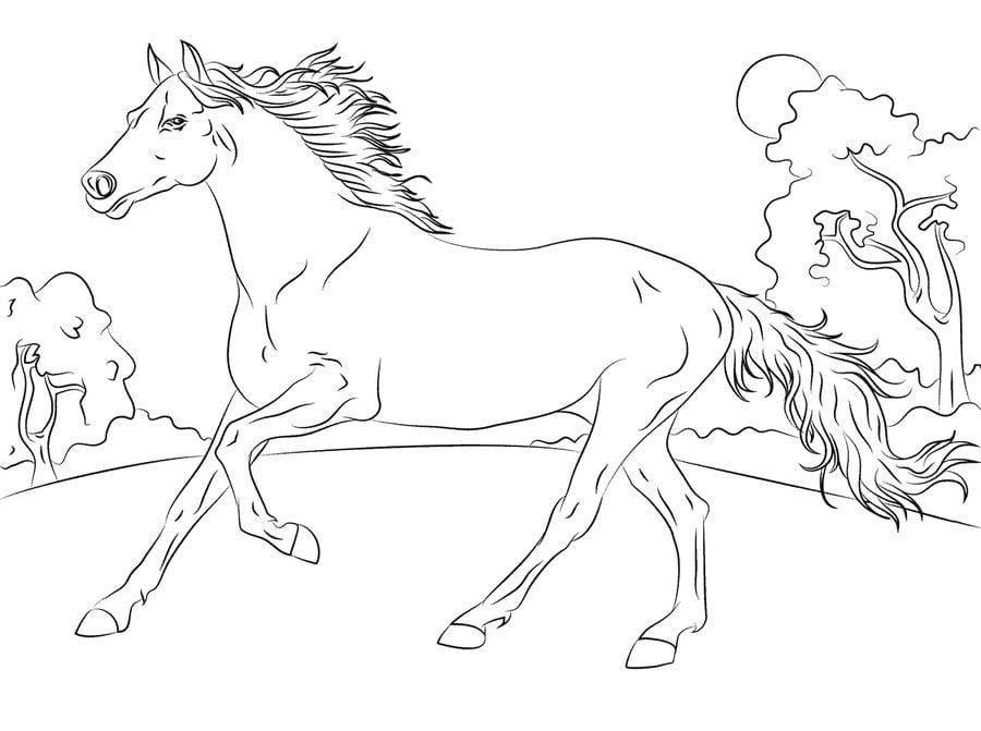 Kolorowanki Kolorowanki Konie Do Druku Dla Dzieci I Doroslych
