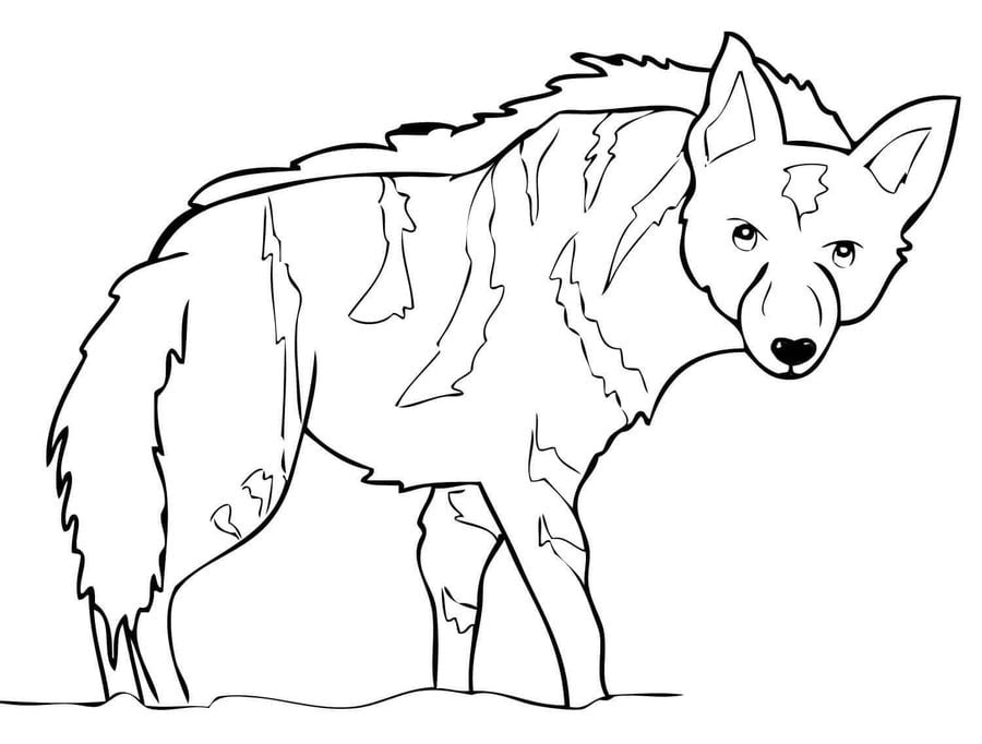 hyena coloring page - disegni da colorare iena stampabile gratuito per