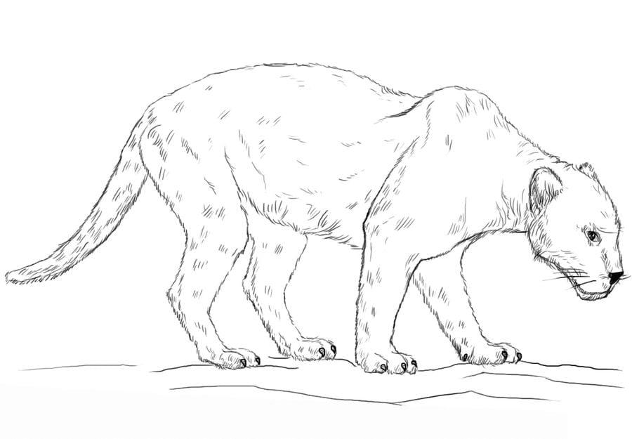ausmalbilder jaguar