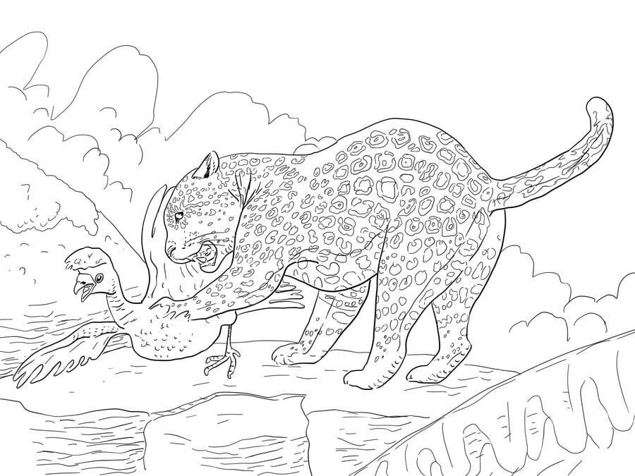 ausmalbilder: ausmalbilder: jaguar zum ausdrucken