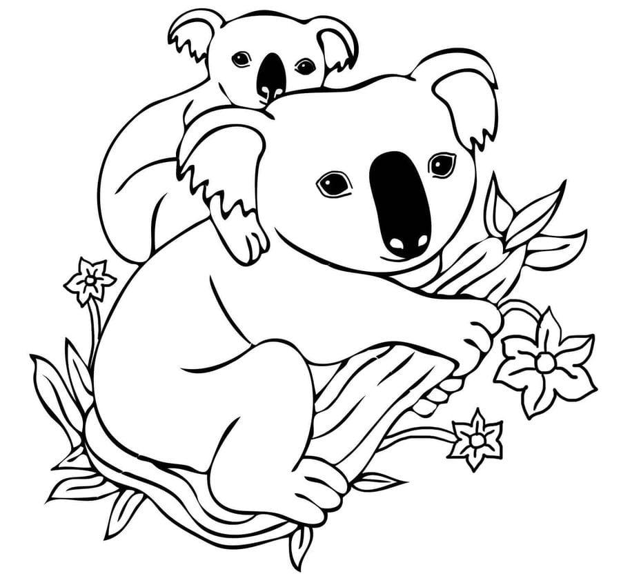 ausmalbilder ausmalbilder koala zum ausdrucken