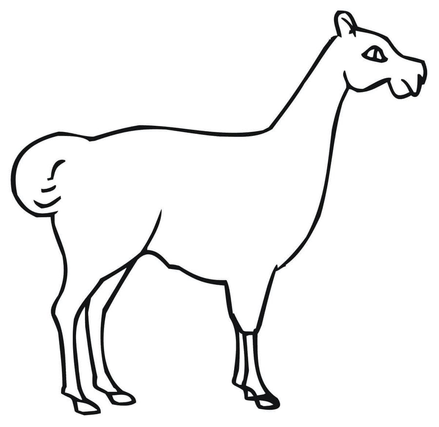 Coloring pages: Llama, printable for kids & adults, free