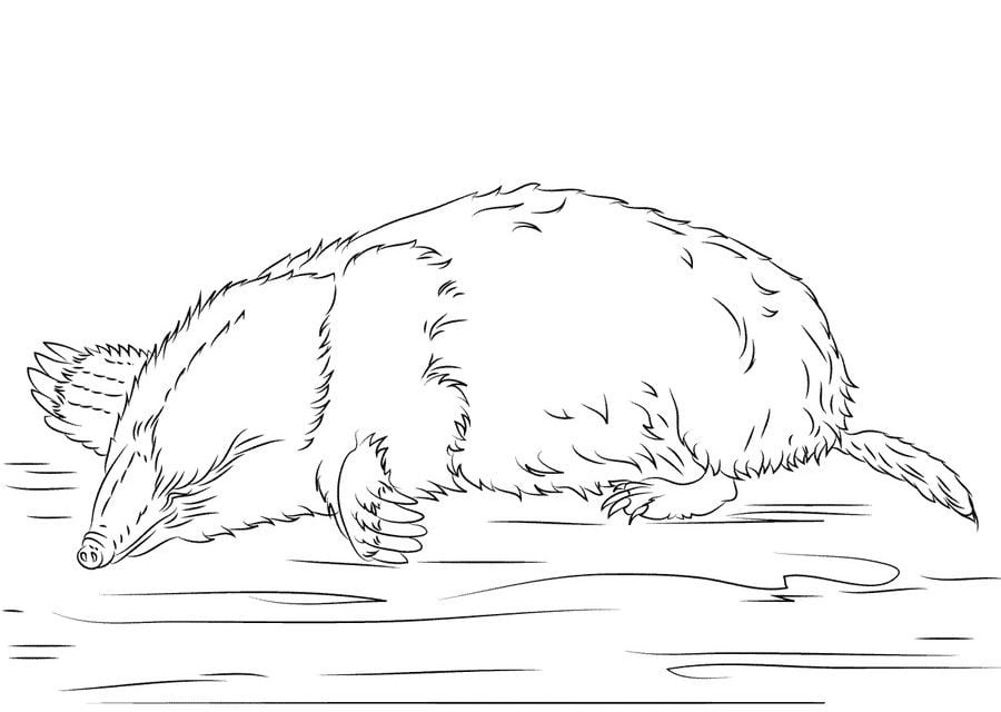 Coloring Pages Coloring Pages Moles Printable For Kids