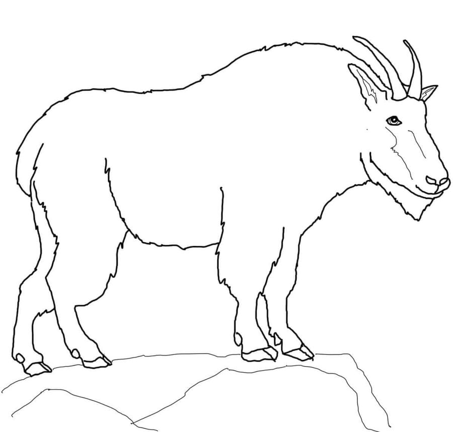 coloring pages mountain goat printable for kids adults free