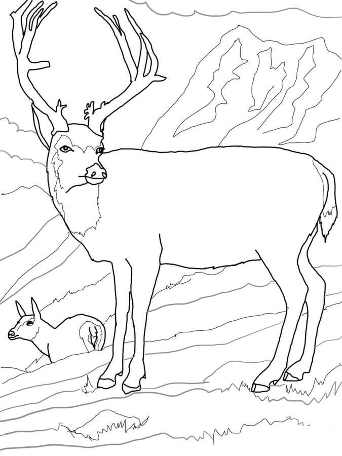 Disegni da colorare cervo mulo