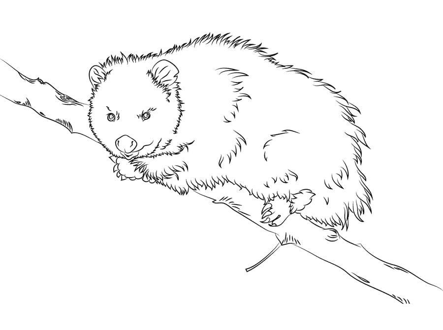 Ausmalbilder: Opossums zum ausdrucken, kostenlos, für Kinder und ...