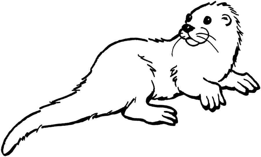 Otters Animals Coloring Pages Mammals