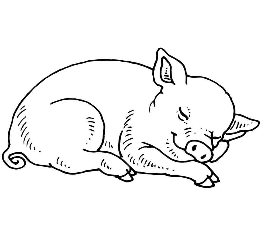 Line Drawing Pig Face : Kolorowanki Świnka do druku dla dzieci i