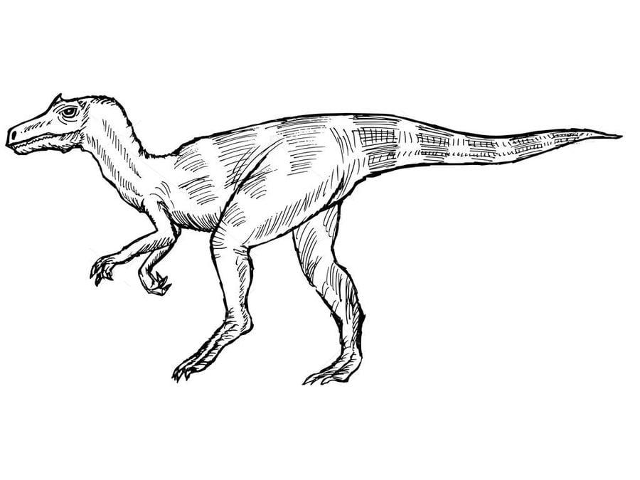 Ausmalbilder Allosaurus zum ausdrucken kostenlos f r