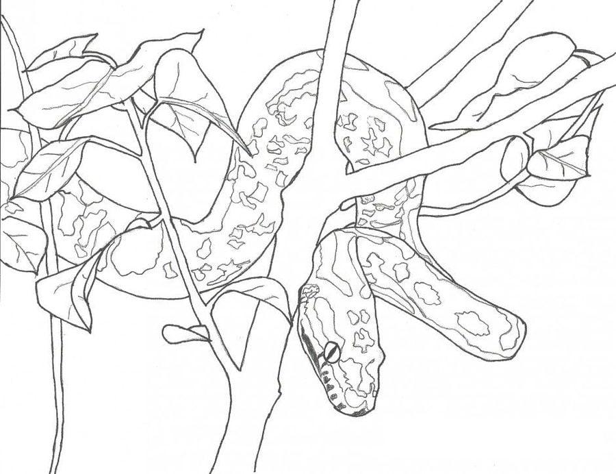 disegni da colorare  disegni da colorare  anaconda