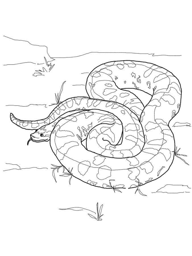 disegni da colorare  disegni da colorare  anaconda stampabile  gratuito  per bambini e adulti