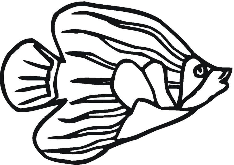 Disegni da colorare pesce angelo stampabile gratuito for Disegni di pesci da stampare