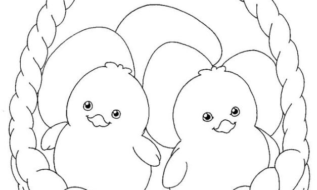 Coloring pages: Baby Chicks