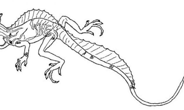 Dibujos para colorear: Reptiles imprimible, gratis, para los niños y ...