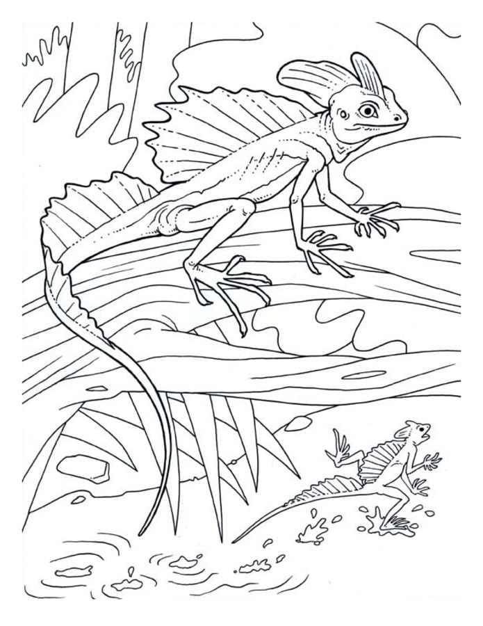 Coloring pages Coloring pages Basilisk lizard printable