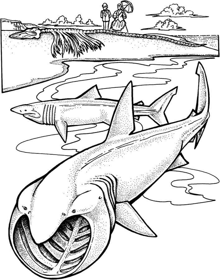 Dibujos para colorear tibur n peregrino imprimible for Goblin da colorare