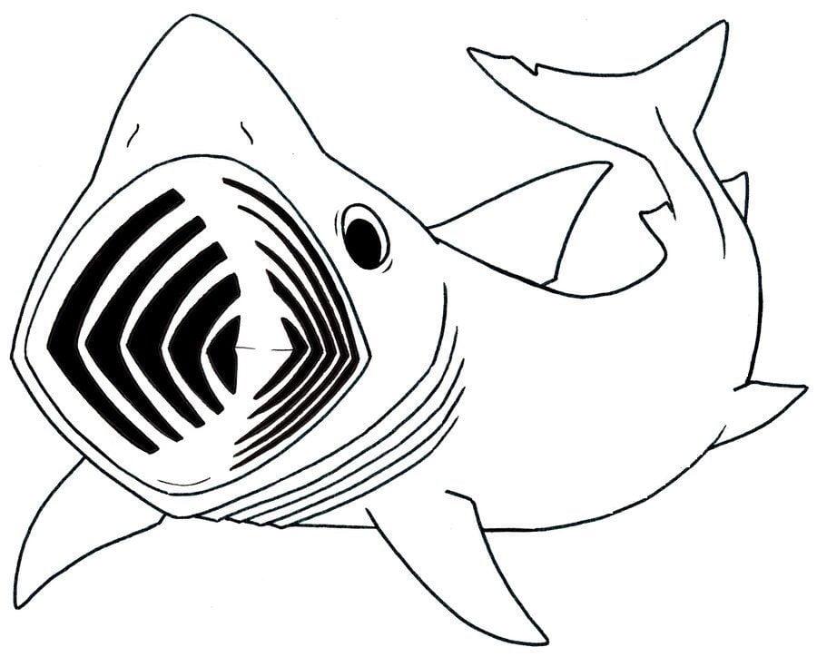 Dibujos para colorear: Tiburón peregrino imprimible, gratis, para ...