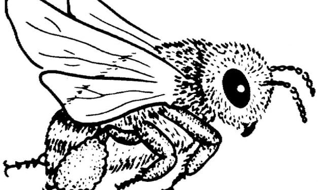 Coloring pages: Bees