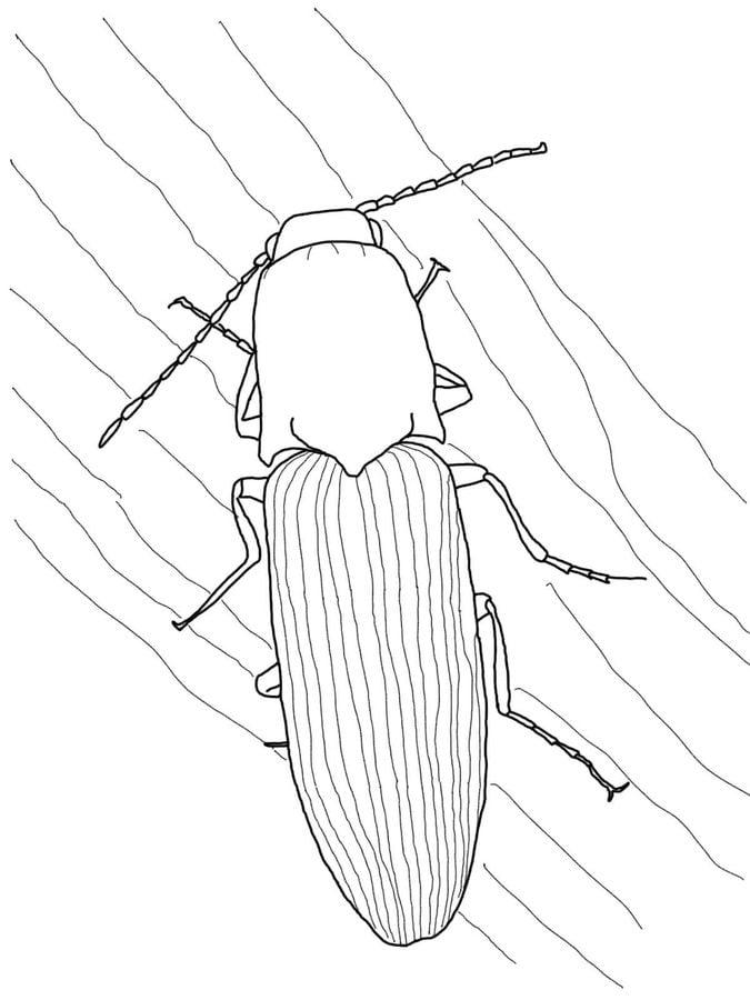 ausmalbilder ausmalbilder käfer zum ausdrucken